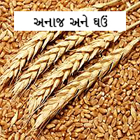 Wheat & Other Grains